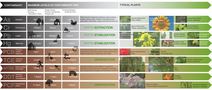 phytoremediation of urban brownfields a case For the purposes of this website within the context of epa's brownfields and land revitalization program, urban agriculture can include public, community and private community gardens as well as larger scale urban farms or orchards as well as growing herbs, spices, flowers for market, raising chickens or livestock, and keeping bees urban.