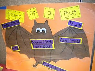 Parts of a Bat - Other great ideas on this page!  (Type text & questions to use when teaching about diagrams)