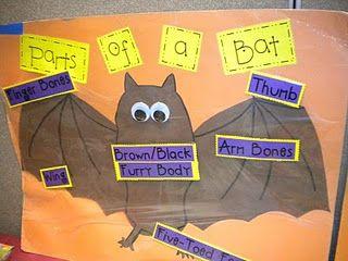 17 best images about KindergartenBats     Owls       Spiders