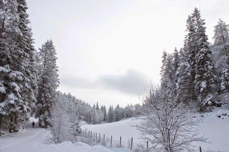 Korin Susanne: magical winter