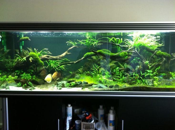 Best 25 fish tank cabinets ideas on pinterest cheap for Aquarium 600l