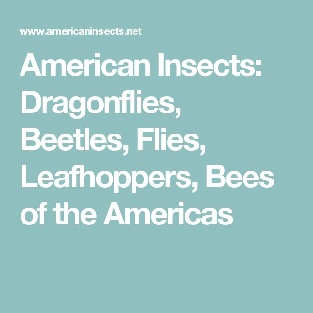 American Insects: Dragonflies, Beetles, Flies, Leafhoppers, Bees of the Americas
