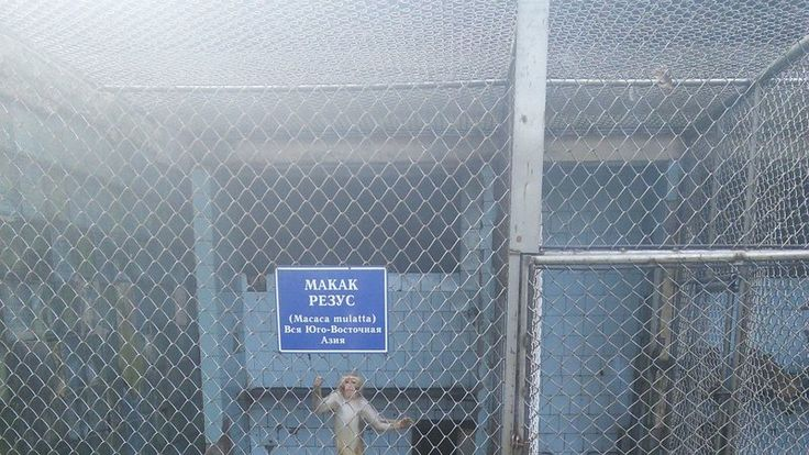 Petition · Mayor of Sukhum: Improve the conditions of detention in Sukhumi monkey nursery · Change.org