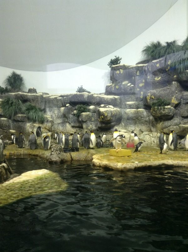 9 Best Moody Gardens Galveston Texas Images On Pinterest Galveston Texas Aquariums And Fish