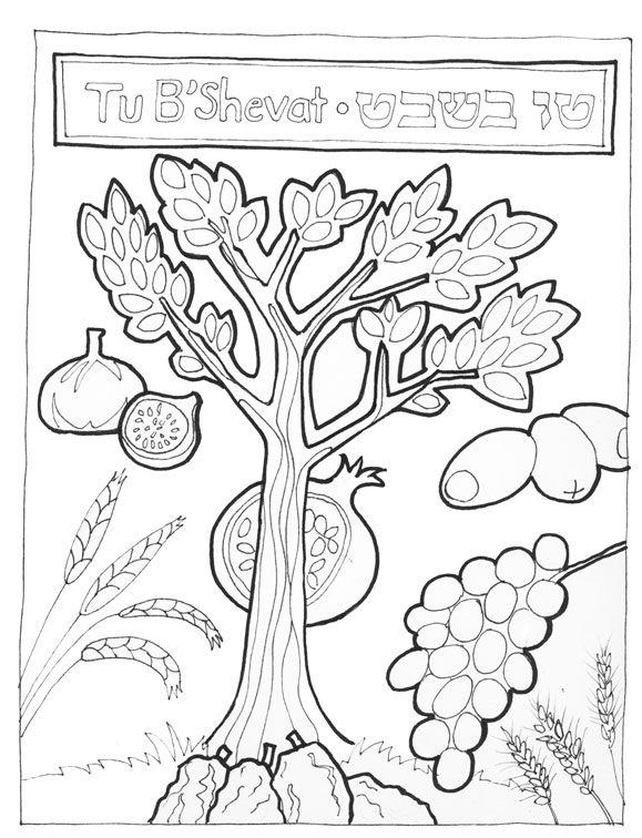 7 fruits for tu bshvat coloring pages | 105 best images about Tu B'Shevat on Pinterest
