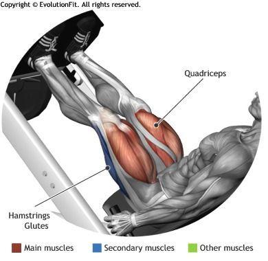 QUADRICEPS -  LEG PRESS 45° core stability glutes