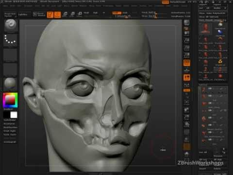 Anatomy of the Face for Artists: Why Anatomy?  http://www.zbrushworkshops.com/anatomy-of-the-face