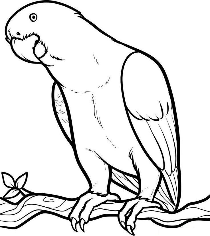 Rainbow Lorikeet Coloring Pages in 2020 Animal coloring