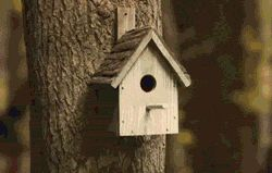 What Happens Inside A Bird House