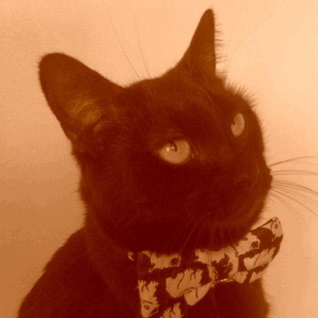 Blackie the posh cat.