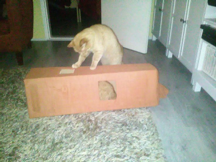 Kissa tunneli