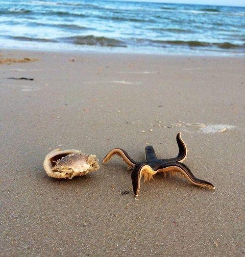 Live starfish on the beach  so cool