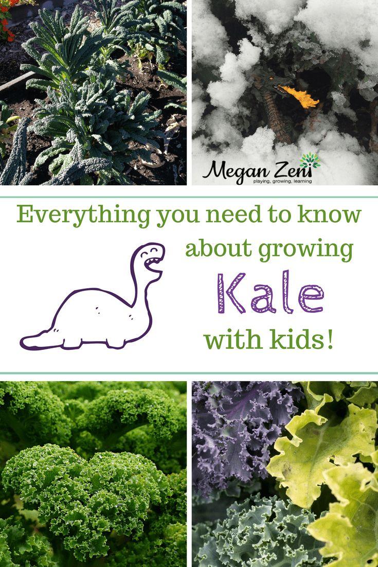 How to grow kale with kids growing kale hardy plants
