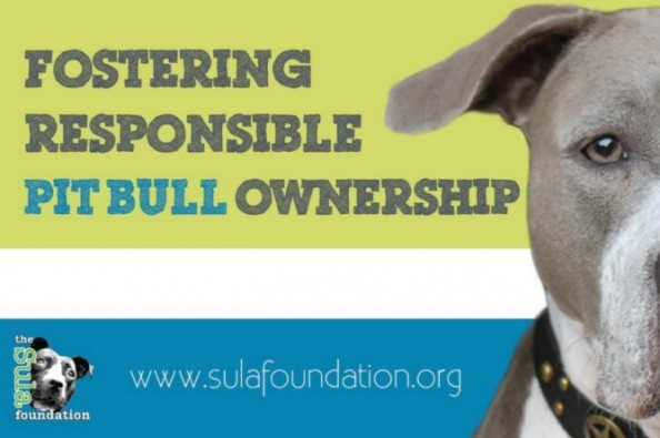 Help support Billboards to combat BSL in Westwego, Louisiana- part of the greater New Orleans area. #neworleans #bsl #pitbulls #pitbull #nobsl