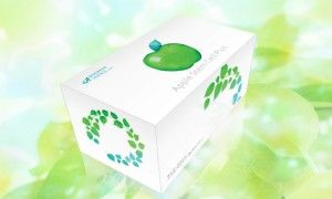 Banyaknya manfaat dari apple stem cell maka dikemaslah dalam produk bernama APPLE STEM CELL PLUS.