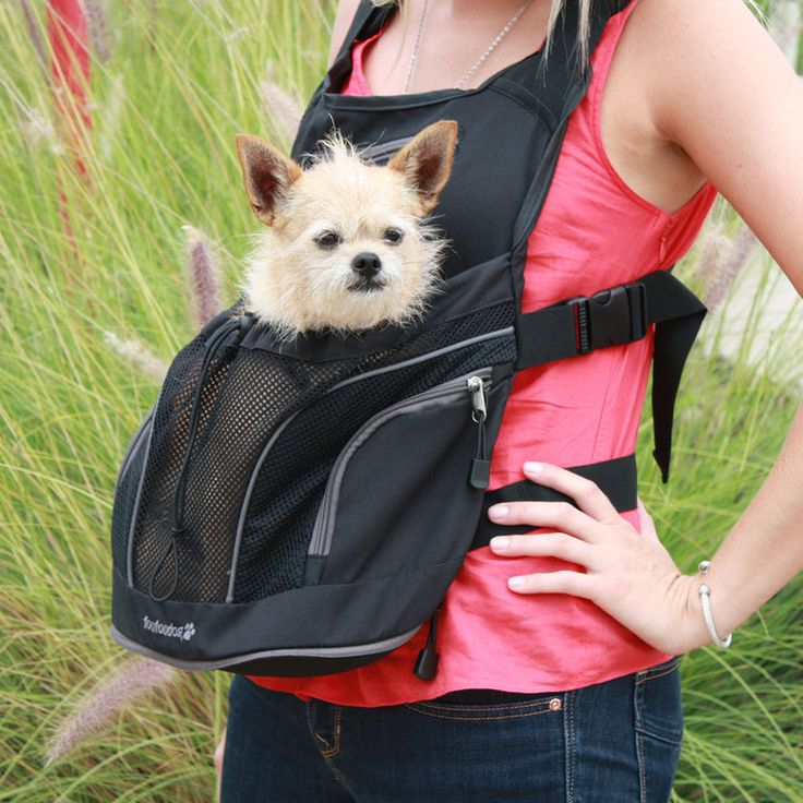 Small Dog Backpack Carriers | ... leather dog leashes retractable dog leashes front pouch dog carrier