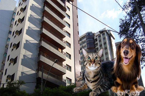 NENHUM CONDOMINIO SE PODE SOBREPOR à LEI GERAL! - contactem a ANIMAL ou a LPDA  Animais em apartamento - não são proibidos por lei