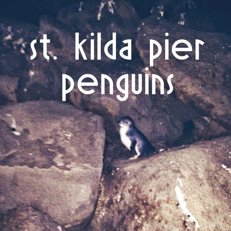 Penguins down at St. Kilda Pier in Melbourne, AUS
