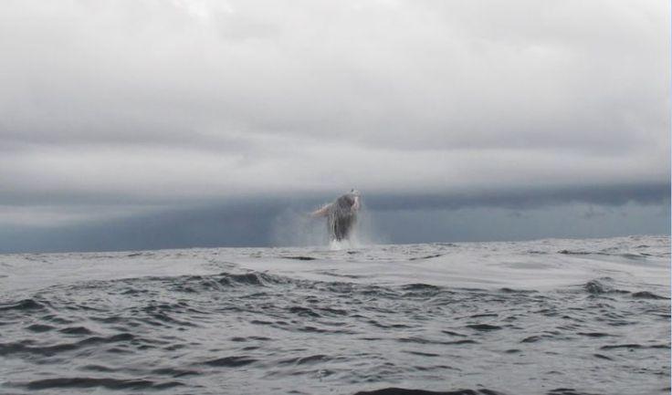 """El Valle - """"In Colombia is het walvissen seizoen tussen juli en september. Walvissen komen om te kalven en dit is de reden dat we hier waren. Toen we de zee op gingen kwamen we midden in een groep van 6 walvissen terecht. Ze zwommen rustig voorbij, spuugde water, speelde met hun vinnen en met elkaar of sprongen uit het water. Machtig mooi en we zijn nogsteeds onder de indruk."""""""