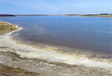 Kalkrige søer og vandhuller med kransnålalger. Kalkrige oligo-mesotrofe søer og vandhuller med bundfæstet vegetation i form af Chara spp.  Nors Sø, Nordvestjylland. Den hvide kalkholdige søbund ses i forgrunden. I søen vokser mange arter af kransnålalger. Foto: Bert Wiklund.  Søer og vandhuller, hvor der vokser kransnålalger på bunden. Søerne er ikke eller kun lidt forurenede og har kalkrigt vand. Ofte ledsages kransnålalgerne af en række andre arter af vandplanter. Ved forurening kan…