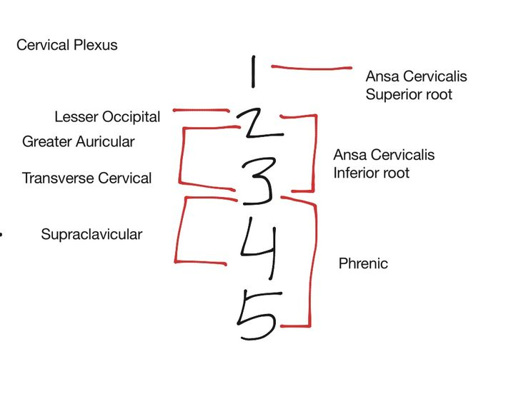 Image Result For Cervical Plexus Schematic