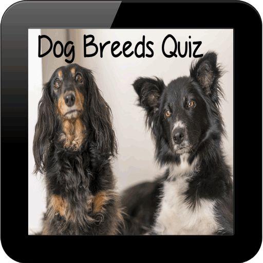 Dog Breeds Quiz : https://play.google.com/store/apps/details?id=com.list.dogbreedsquiz #dogs #breeds