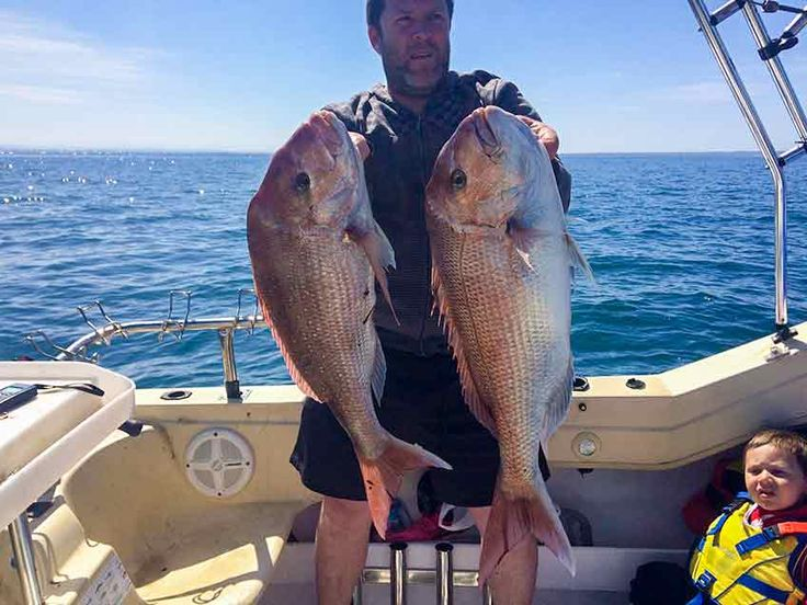 Australian Snapper,snapper,red snapper, Pagrus Auratus,fishing snapper