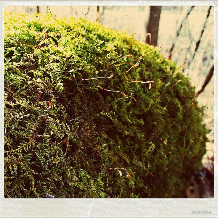 mossy rock3