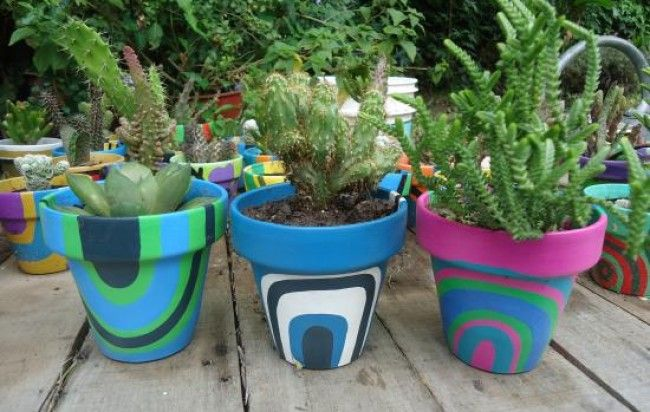 macetas decoradas con cactus