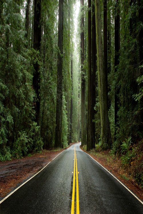 ~J SERENITY ROAD..... !DERIAvenue of the Giants, Humboldt Redwoods State Park, California