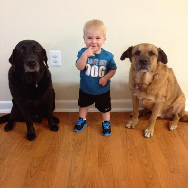 While kindness and selflessness can certainly be taught, some special people just have a natural gift for compassion. This is the case of Roman, a 6-year-old boy who has made it his mission to help as many shelters dog as … http://www.giftideascorner.com/christmas-gifts-mom