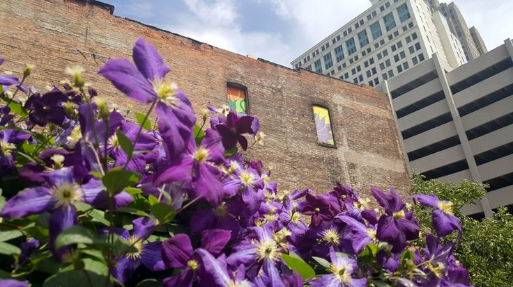 Why Detroit's urban gardens and vacant land are good for at-risk bee populations