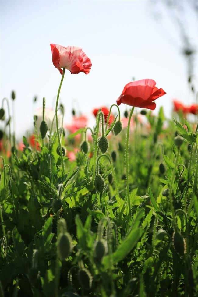 春風に舞う花 - Mannam & Daehwa(キリスト教福音宣教会)