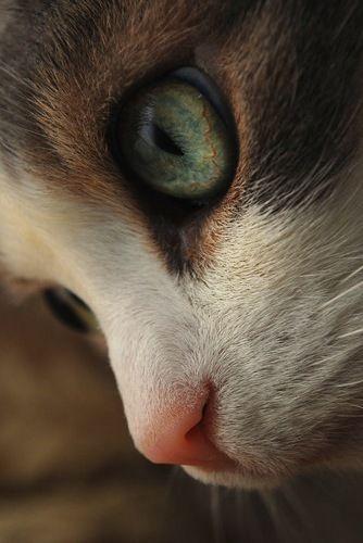 Beautiful kitty....deep in thought.