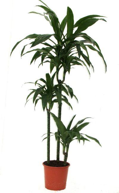1000 ideas about plantes d polluantes on pinterest plante exterieur les p - Depollution par les plantes ...