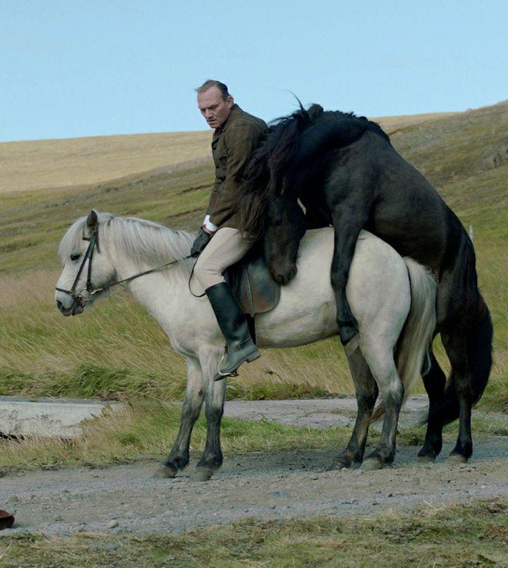 Of Horses and Men (2013) Benedikt Erlingsson // CPH PIX 2014