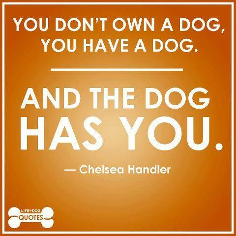Chelsea Handler quote about dogs. You don't own a dog, you have a dog. And the dog has you.