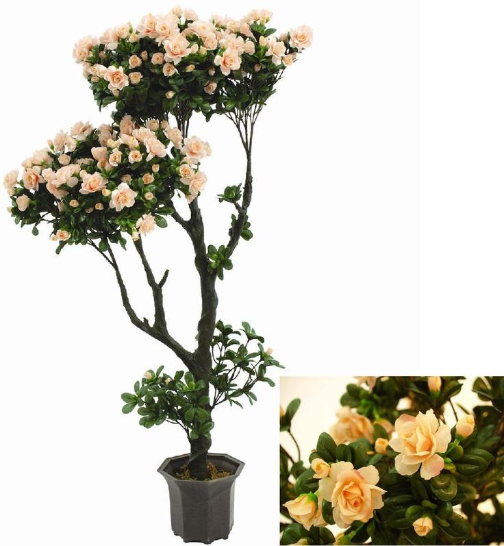 Voluminöser Rosenbusch Der Rosenbusch Ist 110 Cm Hoch Und Wird Im  Zementtopf Geliefert. Die Blütenpracht