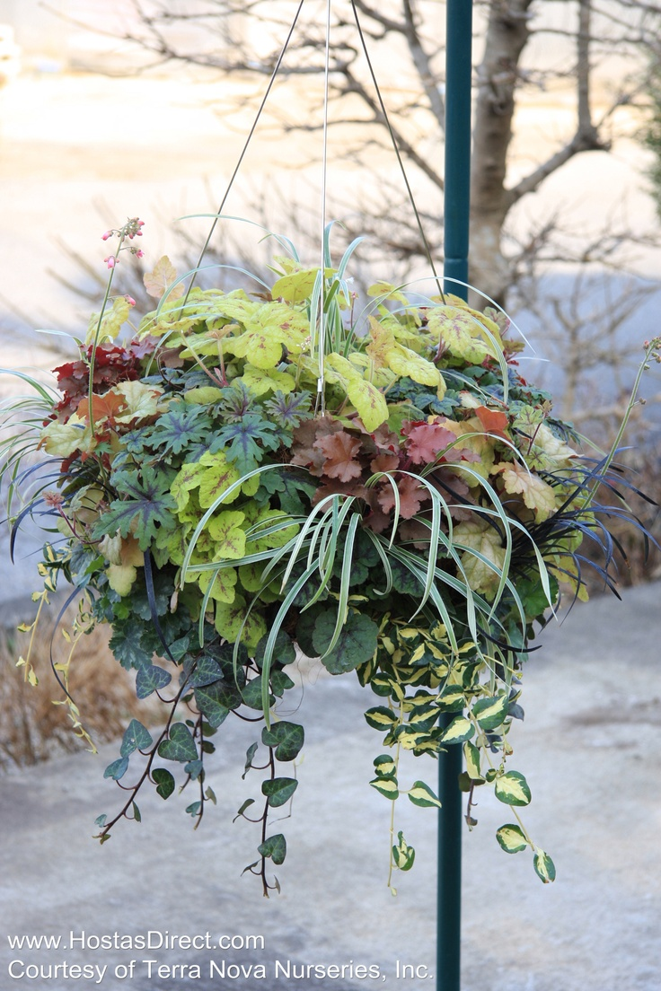 Hanging Flower Basket Maintenance : Best images about hanging basket ideas on