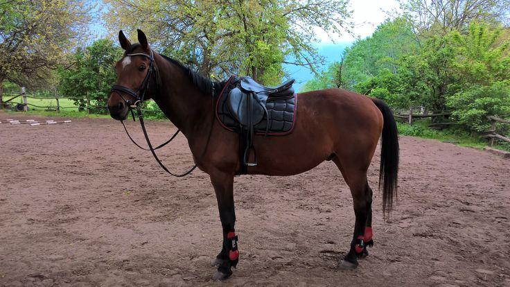 Tattini Shiny Cool Dry Saddlepad + HKM Tendon Boots Red