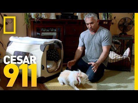 Confronting Richard | Dog Whisperer - YouTube