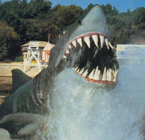 'Carrot-Tooth' - The original shark on the backlot tour.