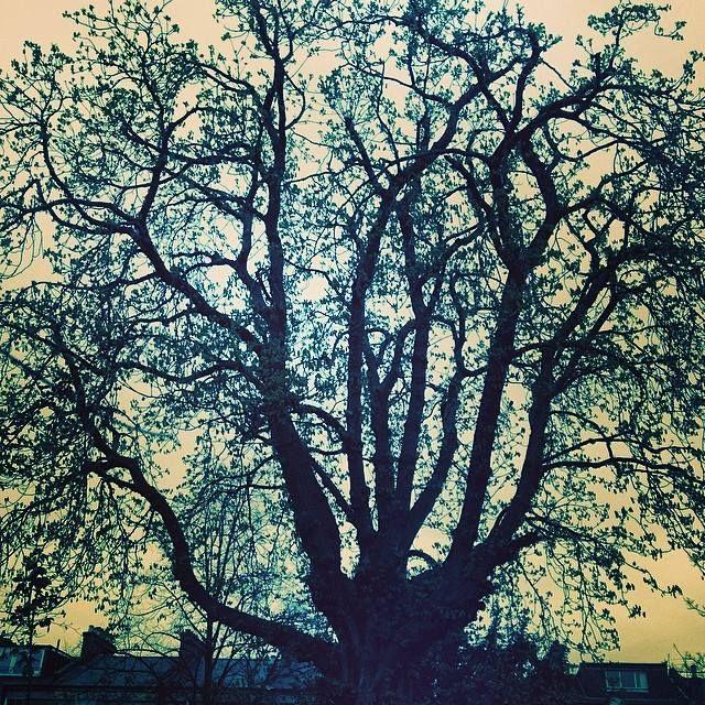 Moody #treeoflaxmi 7.46.19.3.14