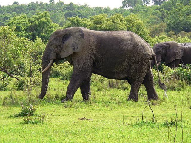 10 Top Destinations in Ghana, from Elmina to Elephants: Mole National Park