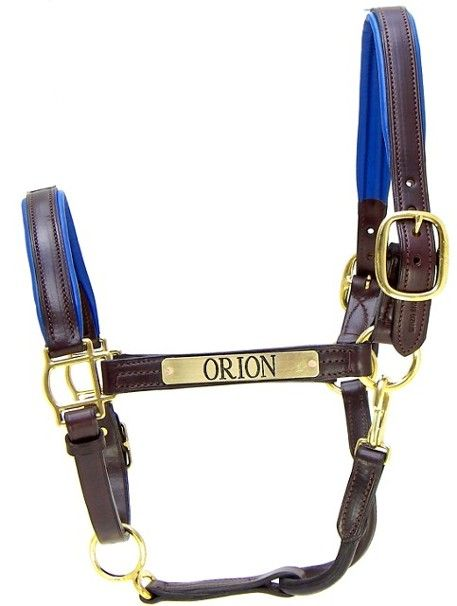 1000 Images About Padded Leather Halters On Pinterest