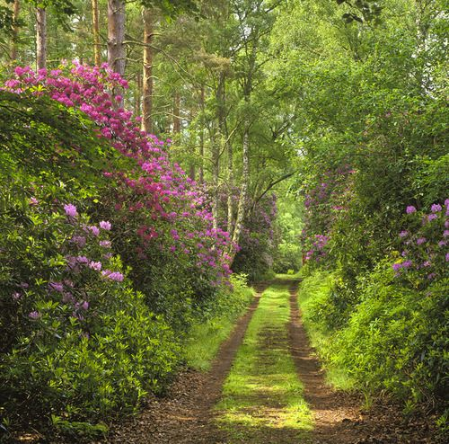 Forest path in spring.