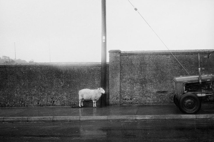© Martin Parr/Magnum Photos RELAND. Manorhamilton sheep fair. From 'Bad Weather'. October. 1980.