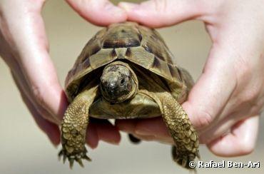 10 conseils pour prendre bien soin de sa tortue - Bioaddict