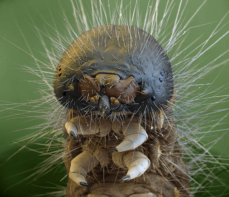 Caterpillar.  Click here for other stunning examples of electron microscope photography
