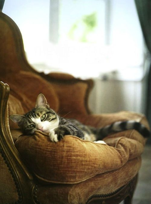 chat fauteuil